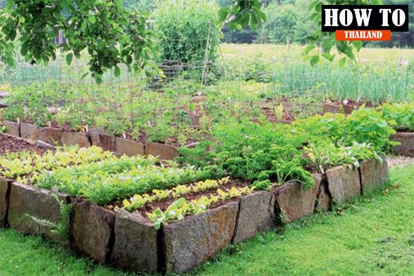 DIY กระบะปลูกผักสวนครัวที่นอกจากจะสวยงามแล้วยังกินได้อีกด้วย DIY HOWTO เคล็ดลับ DIYกระบะปลูกผักสวนครัว